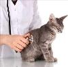 Ветеринарные клиники в Полтавке